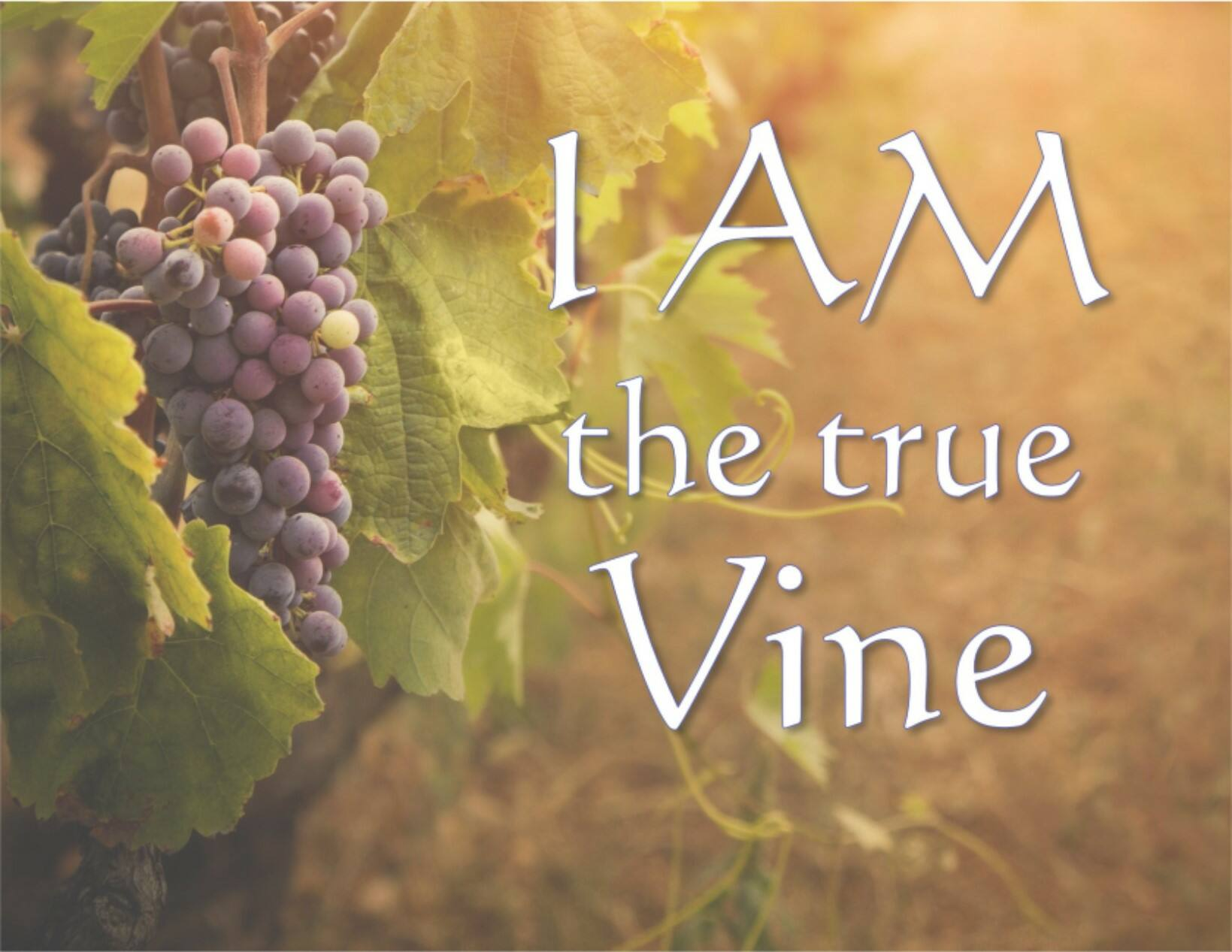 I AM the true Vine: Lessons Learned from the Vine